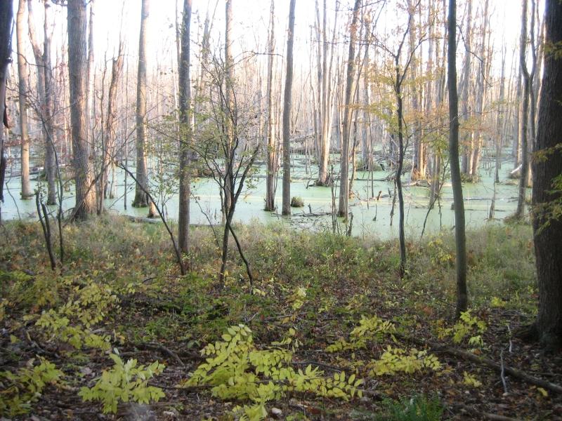 wetlands_swamp